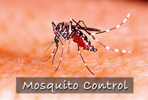 mosquito control, mosquito misting system, kingwood tx